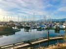 Calm waters at the Comox Marina