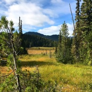 Paradise Meadows in Strathcona Provincial Park